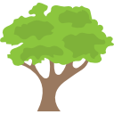 ценная порода дерева